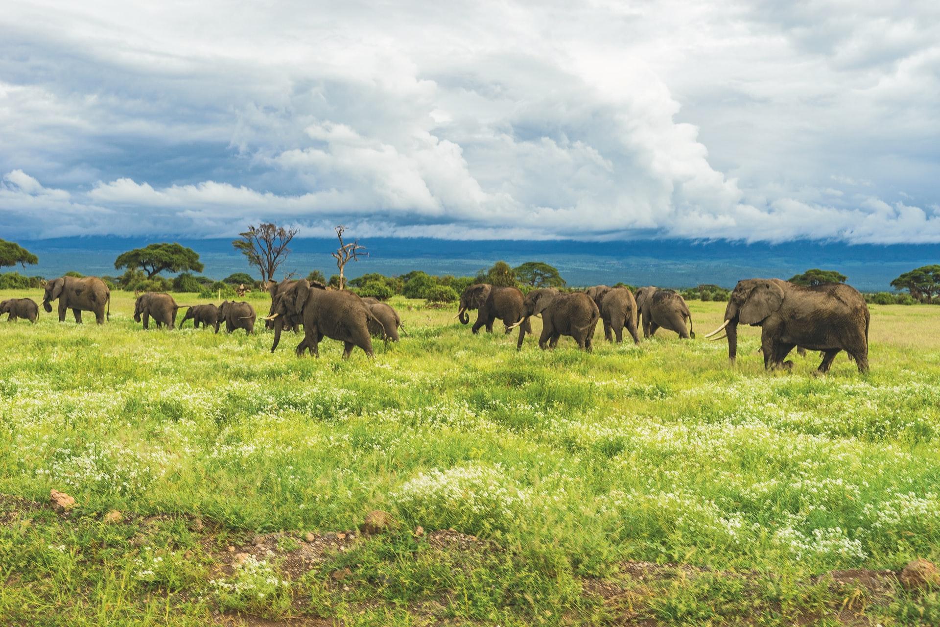 Turismo responsabile in Africa: l'esempio della Tanzania