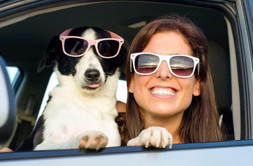 Vacanze Pet Friendly